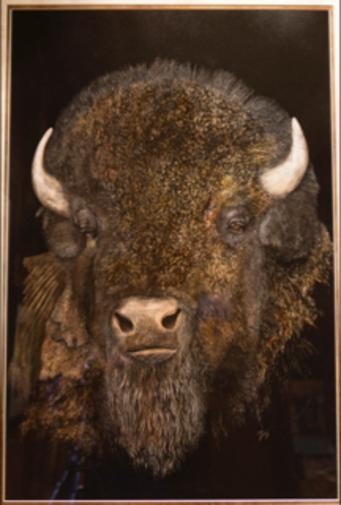 buffaly by George Ann Johnson fine art painter